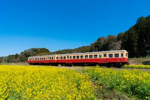 春の菜の花沿線・小湊鉄道の写真素材 [FYI03453416]