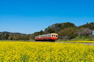 春の菜の花沿線・小湊鉄道の写真素材 [FYI03453417]