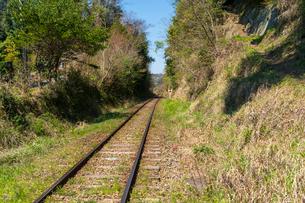 春の菜の花沿線・小湊鉄道の写真素材 [FYI03453420]