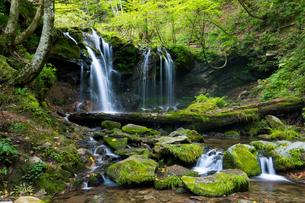 猿壺の滝(兵庫県新温泉町)の写真素材 [FYI03453467]