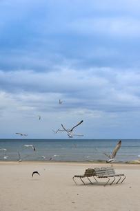 ラトビア・ユールマラのリガ湾のビーチを飛び交う沢山の鳥とベンチの写真素材 [FYI03453559]