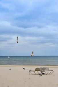ラトビア・ユールマラのリガ湾のビーチを飛び交う沢山の種類の鳥とベンチの写真素材 [FYI03453561]