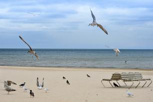 ラトビア・ユールマラのリガ湾のビーチを飛び交う沢山の種類の鳥とベンチの写真素材 [FYI03453562]