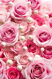 一面のピンクのバラの花と真珠の写真素材 [FYI03453885]