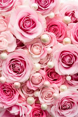 一面のピンクのバラの花と真珠の写真素材 [FYI03453886]