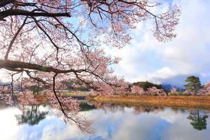 六道の堤の桜の写真素材 [FYI03453981]