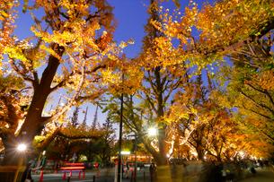 神宮外苑いちょう並木の紅葉の写真素材 [FYI03453987]