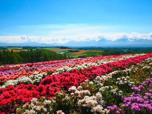 北海道の花畑の写真素材 [FYI03454015]