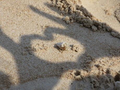 砂浜のヤドカリに指の影でハートを作るの写真素材 [FYI03454132]