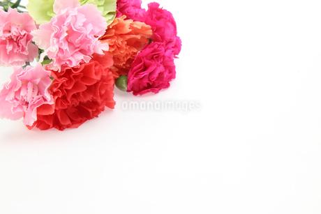 カーネーションの花束の写真素材 [FYI03454261]