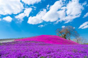 春の房総半島・東京ドイツ村の写真素材 [FYI03454501]