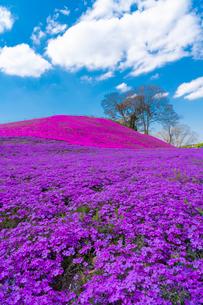 春の房総半島・東京ドイツ村の写真素材 [FYI03454502]
