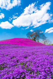 春の房総半島・東京ドイツ村の写真素材 [FYI03454503]