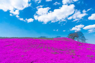 春の房総半島・東京ドイツ村の写真素材 [FYI03454504]