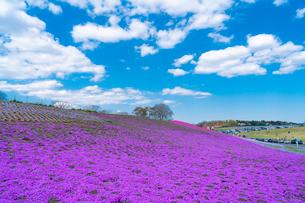 春の房総半島・東京ドイツ村の写真素材 [FYI03454505]