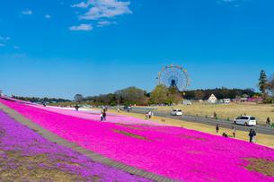 春の房総半島・東京ドイツ村の写真素材 [FYI03454509]