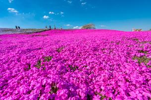 春の房総半島・東京ドイツ村の写真素材 [FYI03454513]