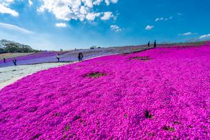 春の房総半島・東京ドイツ村の写真素材 [FYI03454514]
