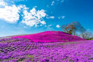 春の房総半島・東京ドイツ村の写真素材 [FYI03454515]