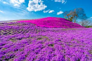 春の房総半島・東京ドイツ村の写真素材 [FYI03454516]