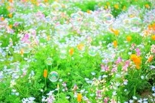 花畑の写真素材 [FYI03454528]