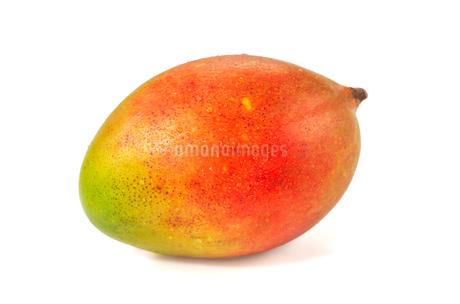 白背景のマンゴーの果実の写真素材 [FYI03454574]