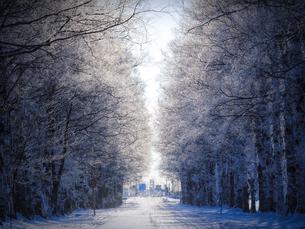 霧氷の写真素材 [FYI03454666]