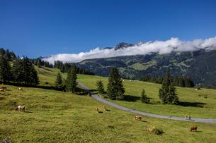スイス、オーバーラント、ヴェンゲンの風景の写真素材 [FYI03454884]