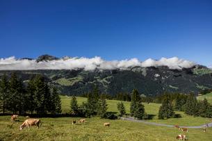 スイス、オーバーラント、ヴェンゲンの風景の写真素材 [FYI03454886]