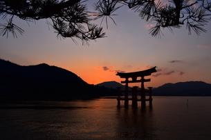 厳島神社の写真素材 [FYI03454898]