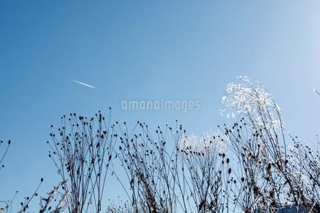 寒い冬の朝の飛行機雲の写真素材 [FYI03455012]
