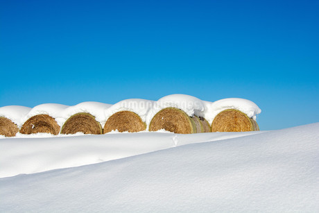 冬の青空と雪がのったムギロールの写真素材 [FYI03455015]