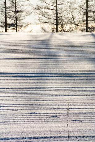 雪原の影と野生動物の足跡の写真素材 [FYI03455019]