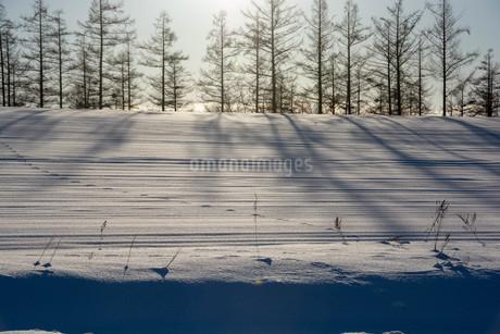雪原のカラマツ林の影と野生動物の足跡の写真素材 [FYI03455025]