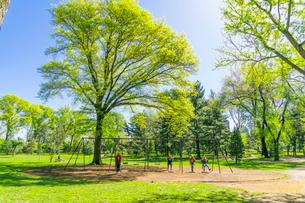 セントラルパーク 太陽に照らされる新緑の大木の下でブランコを楽しむ人々の写真素材 [FYI03455031]