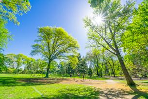 セントラルパーク 太陽に照らされる新緑の大木の下でブランコを楽しむ人々の写真素材 [FYI03455032]