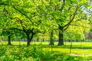 セントラルパーク 芝生の広場沿いに育つ新緑の木々の写真素材 [FYI03455036]