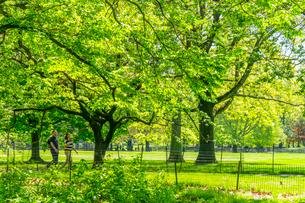 セントラルパーク 新緑に囲まれた小道を歩く若いカップルの写真素材 [FYI03455037]