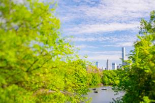 セントラルパーク ザ レイク沿いに生い茂る新緑の木々とミッドタウンマンハッタンの摩天楼の写真素材 [FYI03455067]