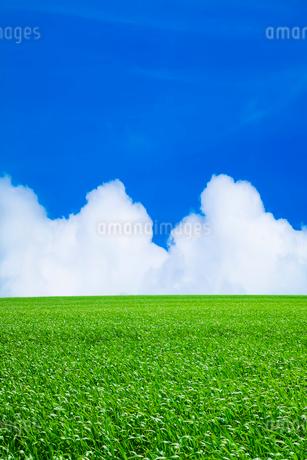 緑の草原と青空に雲の写真素材 [FYI03455967]