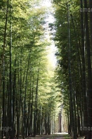 竹林の写真素材 [FYI03456449]