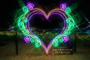 茨城県フラワーパーク イルミネーションの写真素材 [FYI03456739]