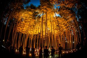 竹林の小径ライトアップ(小机城址市民の森)の写真素材 [FYI03456807]