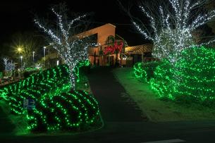 茨城県フラワーパーク イルミネーションの写真素材 [FYI03456831]