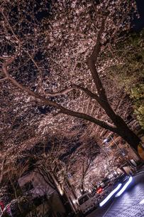 六本木一丁目の桜のトンネルの写真素材 [FYI03456841]