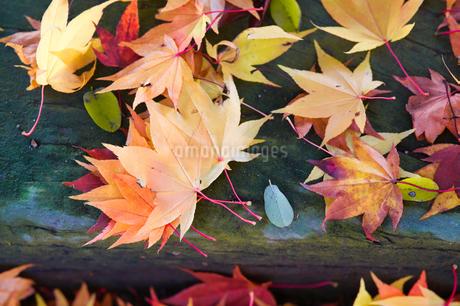 秋の落ち葉の写真素材 [FYI03457070]