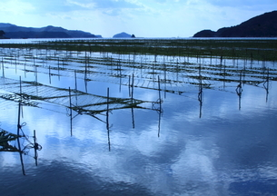 海苔筏点在する伊勢の入り江の海の写真素材 [FYI03457143]