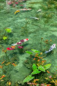 モネの池の写真素材 [FYI03457360]