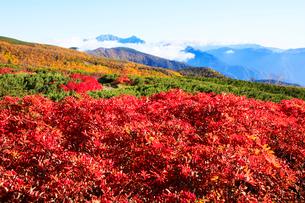紅葉の乗鞍岳の写真素材 [FYI03457507]