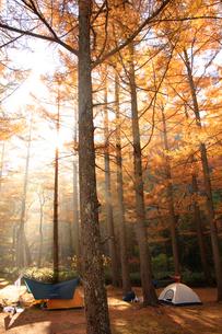 紅葉の上高地沿いにある小梨平キャンプ場の写真素材 [FYI03457539]